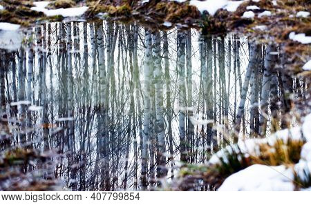 Forest reflection in small pound. Abstract background.