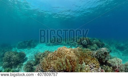 Colourful Tropical Coral Reef. Tropical Coral Reef. Underwater Fishes And Corals. Philippines.