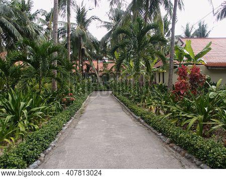 Road In The Tropical Garden, Nha Trang, Vietnam