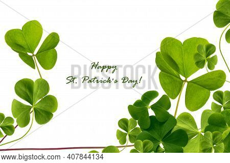 Green Clover Leaves Isolated On White Background. St.patrick \'s Day. Foliage Shamrock