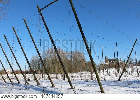 Snow Covered Hop Fields In Affligem, Flemish Brabant In Belgium. Supporting Poles And Strings  In Pl