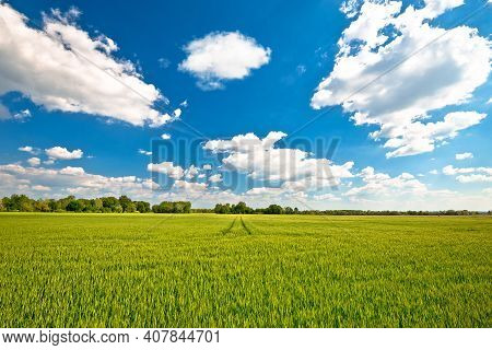 Agricultural Landscape. Green Wheat Field Under Blue Sky View, Podravina Region Of Northern Croatia