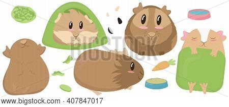 Set Of Cute Guinea Pigs - Beige, Brown, House, Tent, Sleep, Rest, Blanket, Green, Bowl, Feed, Cabbag