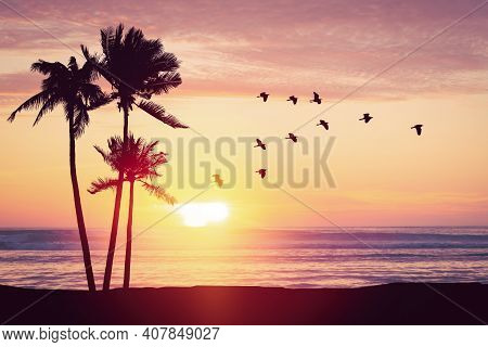 Silhouette Palm Tree At Tropical Beach With Birds Flying On Sunset Sky Abstract Background. Nature E
