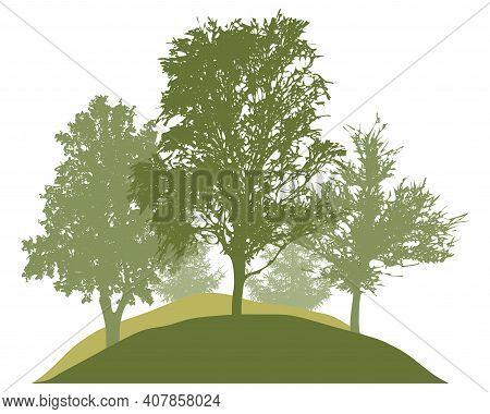 Spring Woodland, Silhouette Of Spring Birch, Chestnut, Aspen, Spruce Trees. Beautiful Nature, Landsc