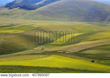 Norcia (pg), Italy - May 25, 2015: The Famous Spring Flowering In The Fields Around Castelluccio Di