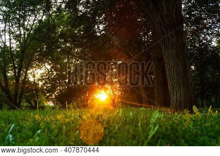 Summer landscape, summer city park and deciduous summer trees lit by sunset light. Summer sunset landscape