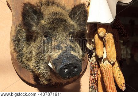 Norcia (pg), Italy - May 25, 2015: Stuffed Wild Boar Cinghiale Outside A Shop Norcia, Umbria, Italy,