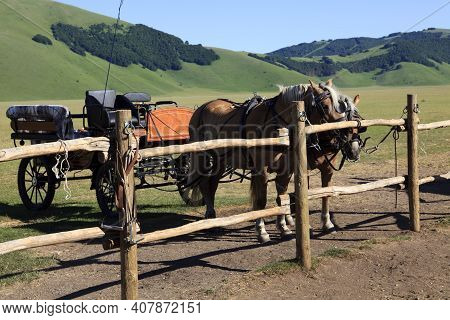 Norcia (pg), Italy - May 25, 2015: Horses With A Cart In The Country Near Castelluccio Di Norcia, Hi