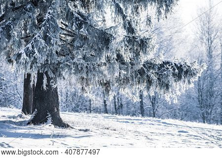 Winter Christmas Idyllic Landscape. White Trees In The Forest Covered With Snow, Drifts And Snowfall