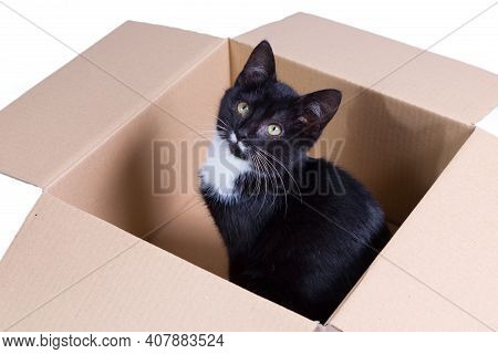 A Cute Three Month Old Black Tuxedo Kitten In A Cardboard Box Looking Up In An Innocent Way.