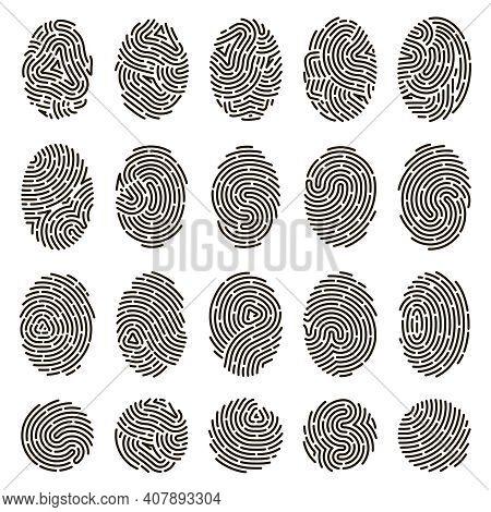 Fingerprint Identification. Biometric Human Fingerprints, Unique Thumb Lines Imprint. Security Finge