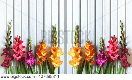 Close Up Horizontal Banner Of Multicolored Varieties Of Gladiolus On Background Of Wooden Boards Pai