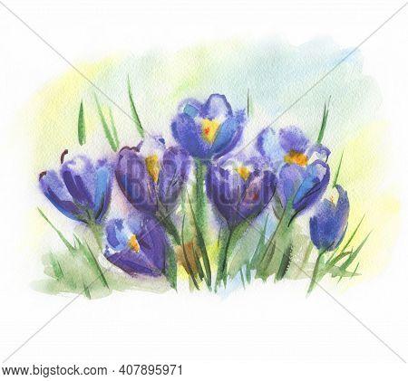 Watercolor Purple Crocuses. Saffron Flowers. Spring Flowers Primroses. Drawn By Hand.