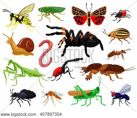 Cartoon Insects. Wood And Garden Cute Insects, Butterfly, Caterpillar, Spider, Ladybug And Wasp. Bug