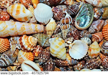 Seashells On Ocean Sea Beach Pattern Texture, Shell Tropical Background. Seashell Exotic Background