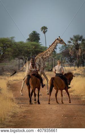 Southern Giraffe Passes Two Women Riding Horses