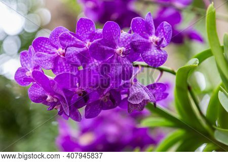 Vanda Orchid In Spring, Spring Background. Spring Composition In Soft Tones, Spring Card, Colorful S