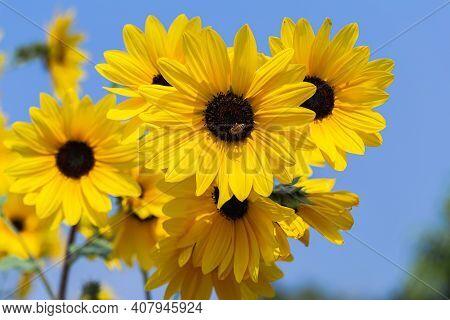 Sunflower In Spring, Spring Background. Spring Composition, Spring Card, Colorful Spring Backgorund,