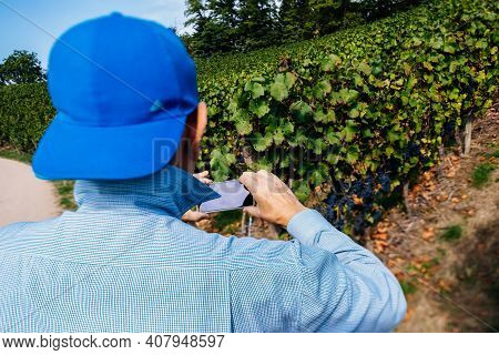 Rear View Of Trendy Senior Male Owner Of Vineyard Taking Photographs Of His Domain With Blue Fresh G