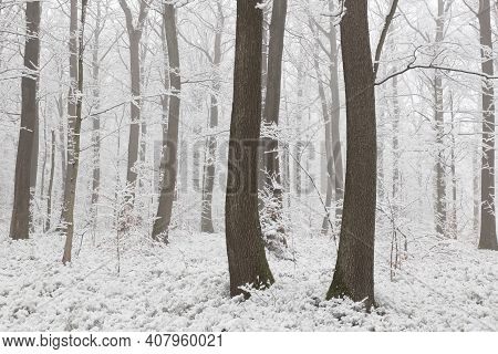 Winter woods forest background Nature landscape Nature background landscape Nature snow Nature background landscape Nature background landscape Nature landscape Nature background trees Nature landscape Nature background landscape Nature background.