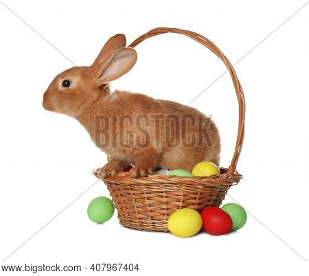 Adorable Furry Easter Bunny In Wicker Basket With Dyed Eggs On White Background