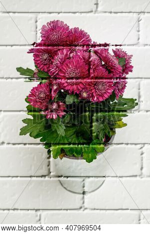 Chrysanthemum Indicum Purple - A Bouquet Of Tiny Flowers That Bloom Nicely On A Bright Background In