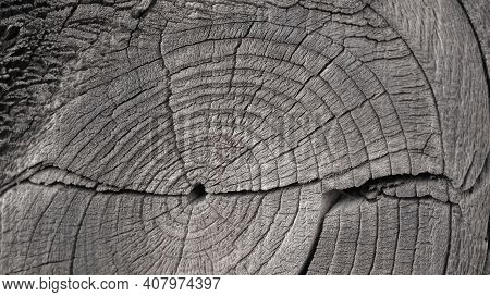 Cracked Bough On An Old Dry Wooden Board Close-up. Black And White Monochrome Background. Natural Wa