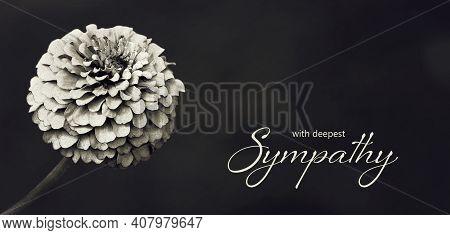Sympathy Card With Zinnia Flower Illustration On Dark Background