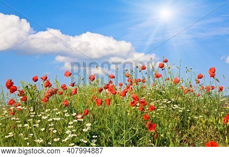 Summer Beautiful Red Poppy And White Camomile Flowers On Blue Sky With Cloud And Sunshine Background