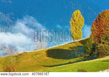 Sunny Autumn Mountain And Colorful  Trees On Mountainside