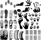 A collection of Vector Fingerprints Footprints and more on white poster