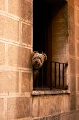 Small dog is watching from the balcony on street of Zaragoza, Spain poster