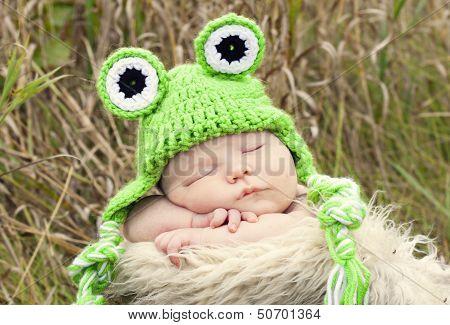 Sleeping froggie