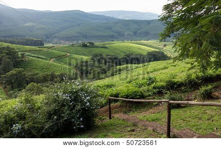 South Africa Countryside In Komatiland Forest