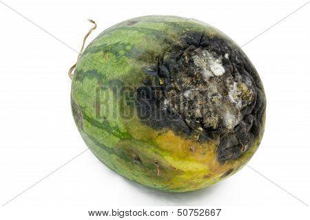 Rotten Watermelon.