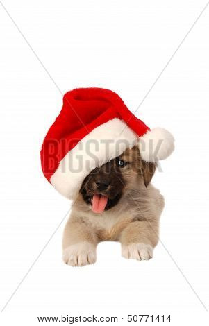 Cute Puppy In A Christmas Hat - Holiday Theme