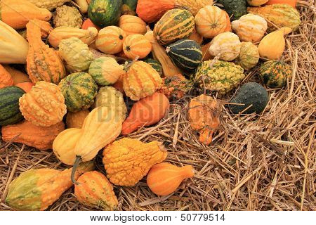 Bountiful arrangement of colorful gourds