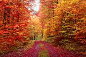 Book Autumn Forest in October, with forest in autumn colors, Red and Orange colors forest. poster