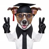 graduate dog with peace fingers and happy poster