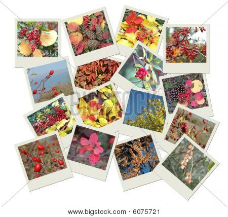 Stack Of Photo Shots With Autumn Tints poster