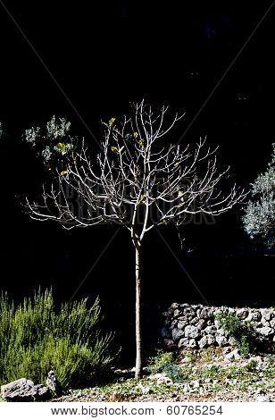 Small Sunlit Tree In Black