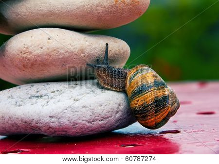 Snail Crossing A Rock Barrier