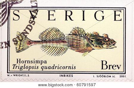 Fourhorn Sculpin Stamp