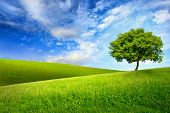 Scenic paradise with a single tree on top of a green hill blue sky and white clouds and another hilly meadow in the background poster