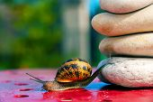 cute funny snail from crossing an obstacle poster