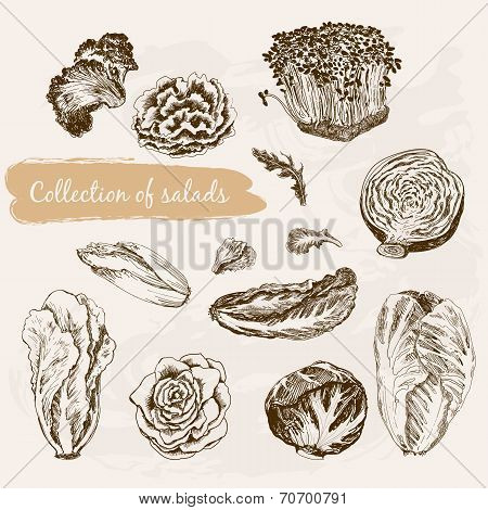 Collection of salads