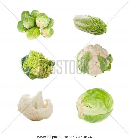 Set Of Different Sorts Of Cabbage