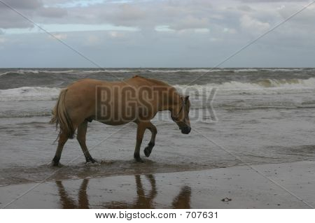 Horse Sea-walking