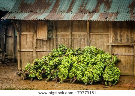 Big bunch of bananas